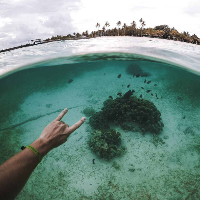 Half Underwater Photograpy of Coral Reef and Fishes during diving