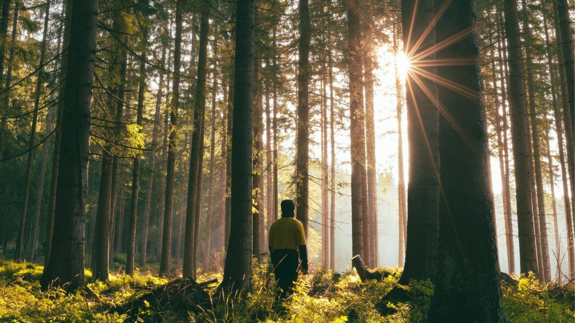 Photography of a person standing in woods with direct sunlight