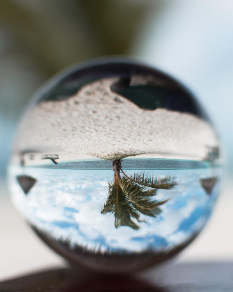 Photo of palm tree through Lensball