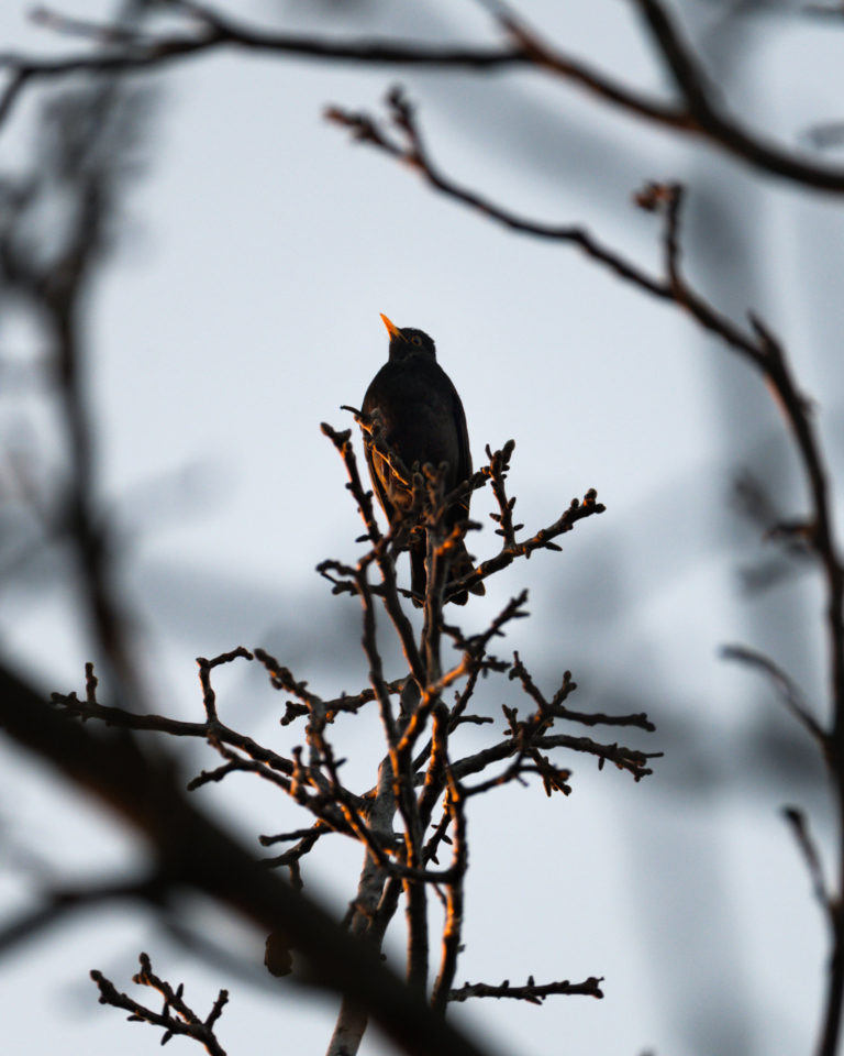 Late sunset view with a black bird sitting on a tree