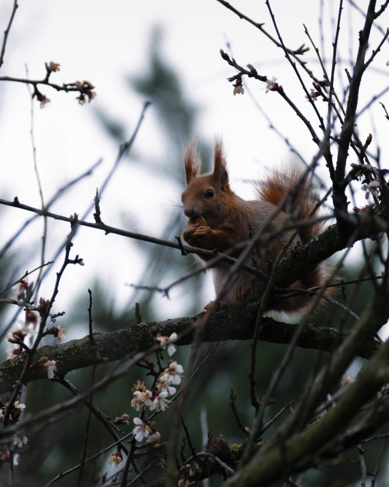 Watching a squirrel on a tree