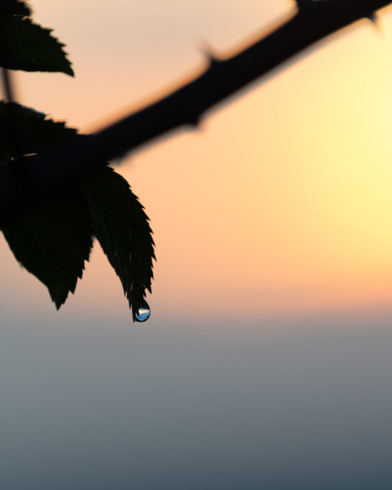 Detail of the rain drop in sunset time on Bila Hora