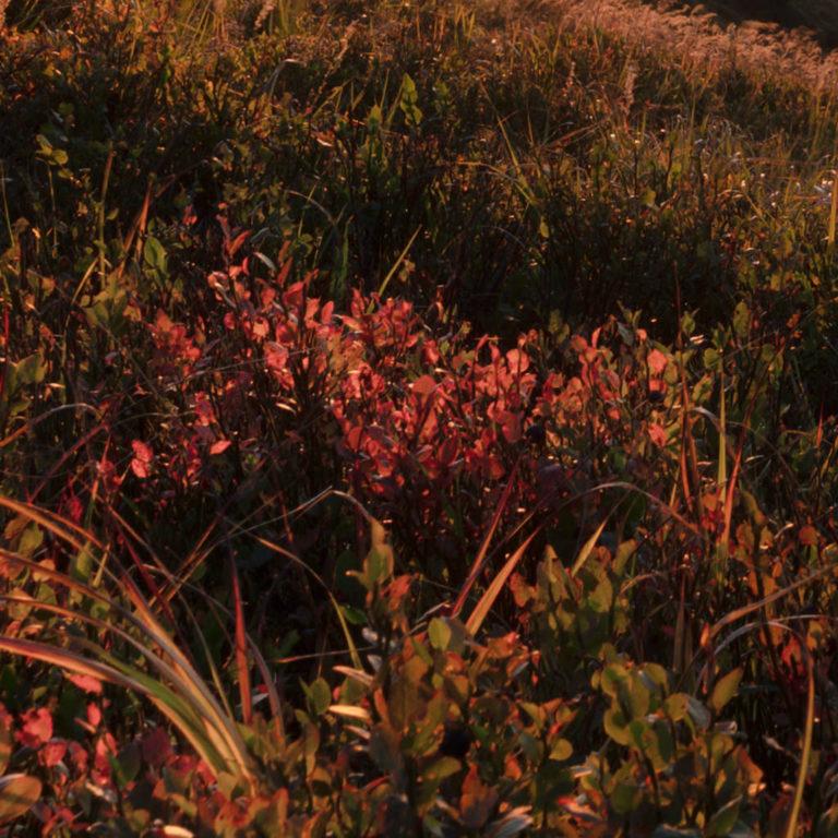 Sunset capture in Krkonose mountains by Nikon Z6 - detail